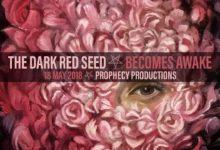 Dark Red Seed